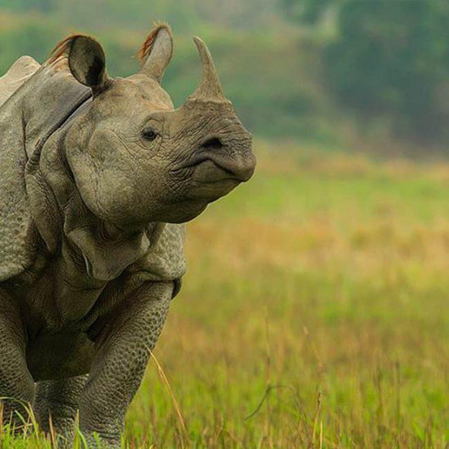 Kaziranga Wild Life Safari Banner