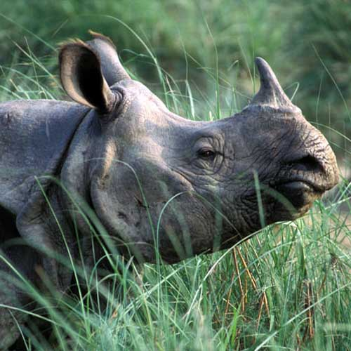 Kaziranga Wild Life Safari Feature Image